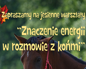 Jesienne Warsztaty 2015 – Zielomyśl